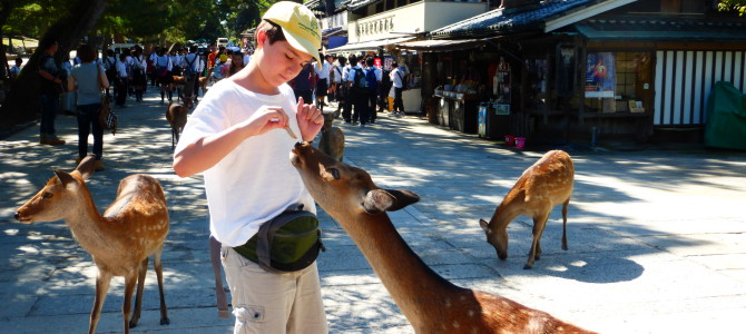 Feeding Deer at Todaiji Temple