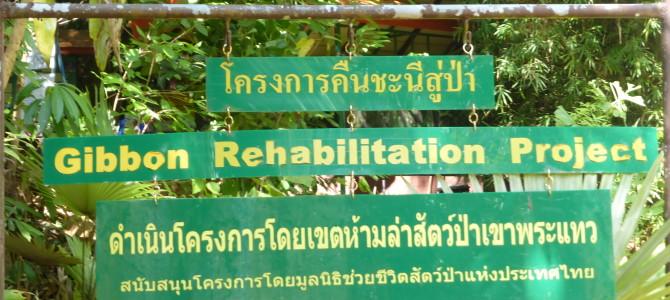 Gibbon Rescue On Phuket, Thailand
