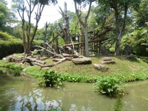 Cage free monkey area