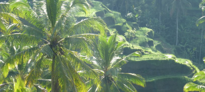 Bicycling Through the Rice Paddies – Ubud, Bali