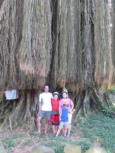 500 + year old Banyan Tree
