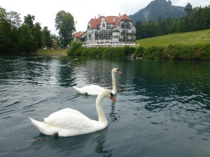 There are actually swans on Swan Lake